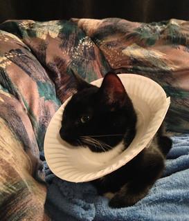 Homemade Lampshade Cat Collar