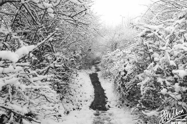 Black and Snow