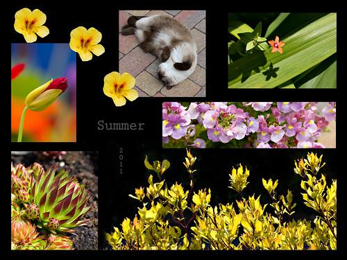 Garden Montage, Summer 2011