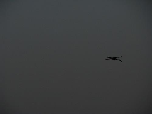 A lone flier by mdashf