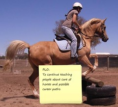 My PLO as an Equine Teacher
