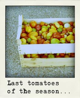 cagette tomates-pola