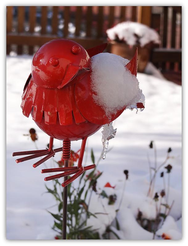 """""""Feuervogel"""" im Schnee"""