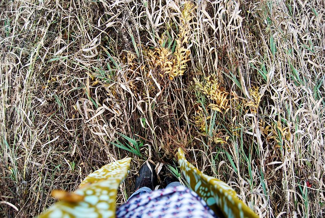 mowed pasture