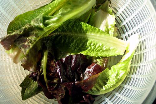 Pretty lettuce