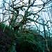Deepcliff Harden Moor