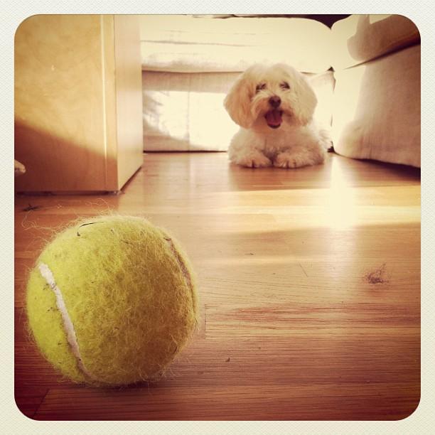 Greit hypp på den ballen.