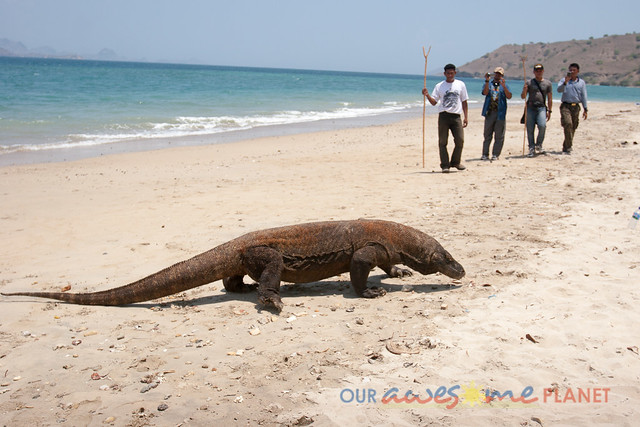 Komodo Dragon National Park-95.jpg
