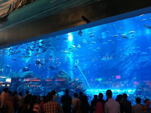 Iso akvaario ostarilla.