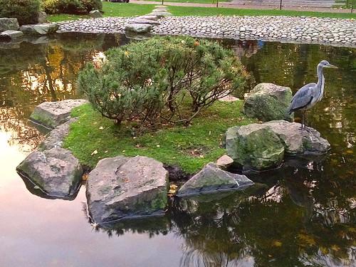 Turtle island in Kyoto Garden
