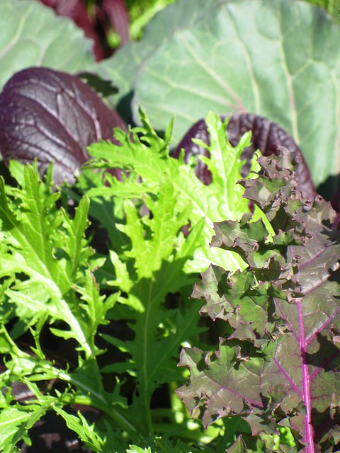 Healthy Greens Growing Together