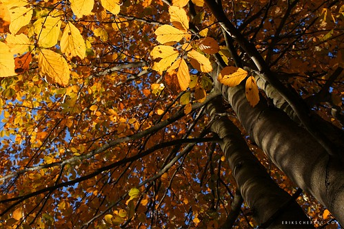 Autumn Sun by Erik Schepers