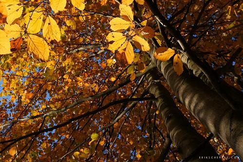 Autumn Sun by Erik Schepers