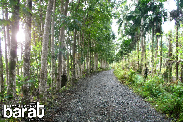 trail to ditumabo mother falls san luis aurora