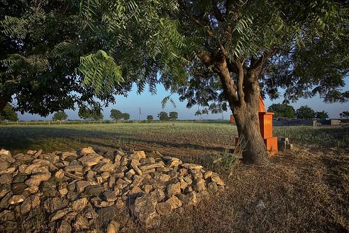 Near Shinay, Gandhidham,Kutch by Jayesh Bheda