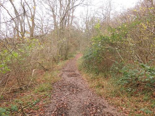 King's Wood - Winscombe