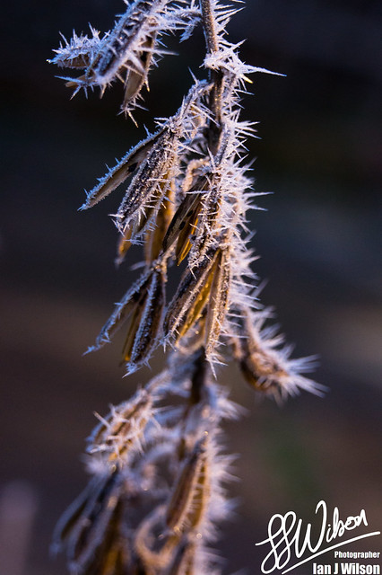 Frosticles – Daily Photo (14th December 2012)