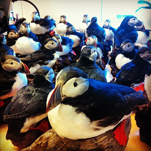 #puffin attack at the office!
