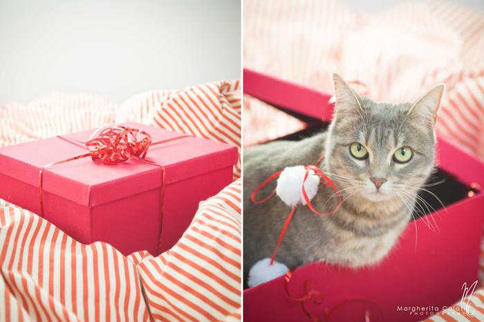 Christmas gift idea: photographic shooting