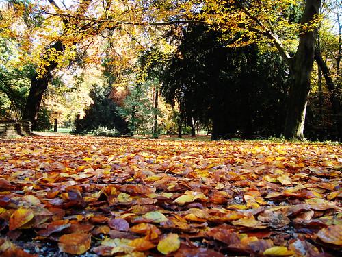 Monza park - autumn leaves