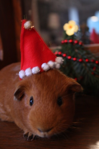 Merry Nibbles