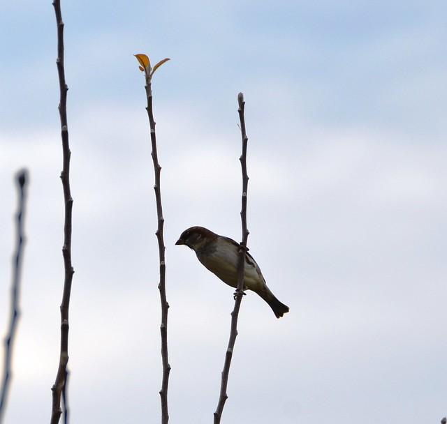 1 bird