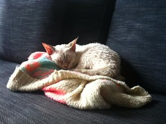 Doris the cat sleeping on my jumper