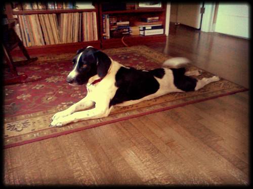 More boingle yoga with Teddy