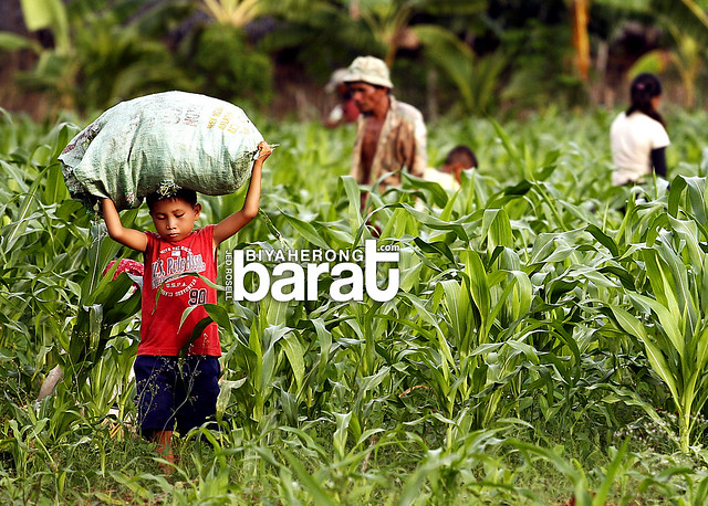 Madridejos Cebu Bantayan Island child brings corn