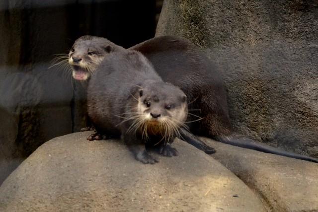 Otter Complaint