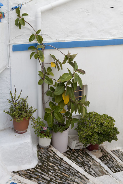 Ano Syros, Syros, Greece, Greek island, steps, potted plants