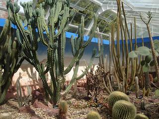 Cactii and venomous plants