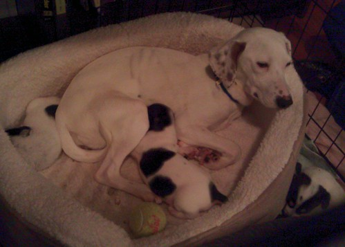 Momma plus puppies