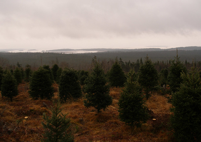 Keatings Tree Farm 2006