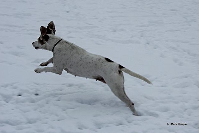 Berta Enjoying the Snow