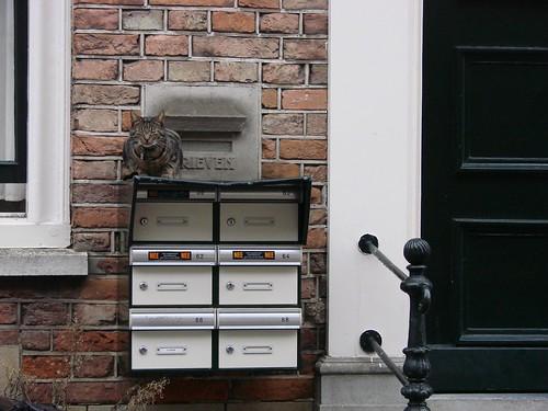 Mail Cat