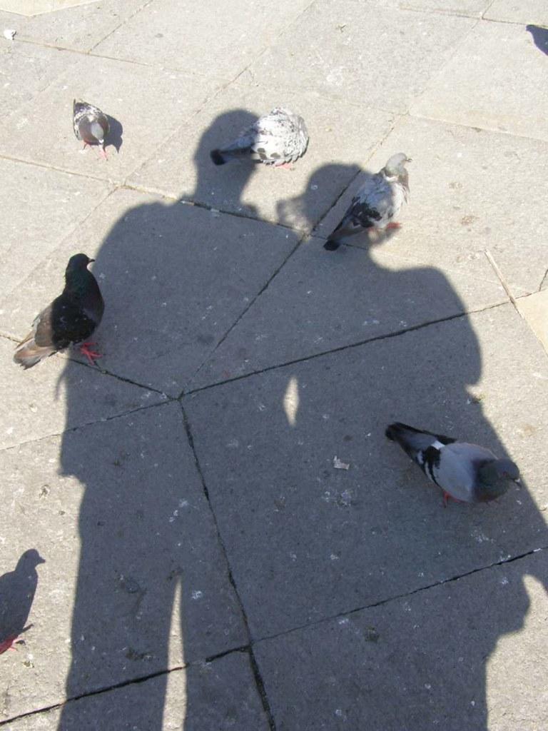 Shadow_3
