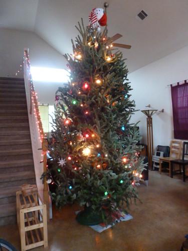 12-14-12 TX - Austin, Christmas Tree