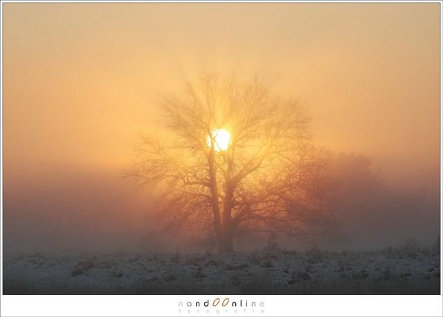 De zon achter de bomen bij 145mm brandpunt op een EOS 1Dmk3 (1,3 crop). Dit is hetzelfde als 200mm op een full frame.