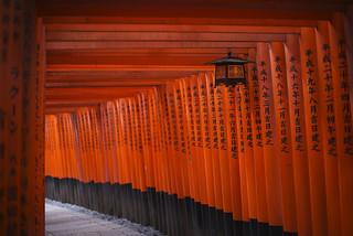 Torii at Fushimi Inari-taisha shrine, Kyoto (II)