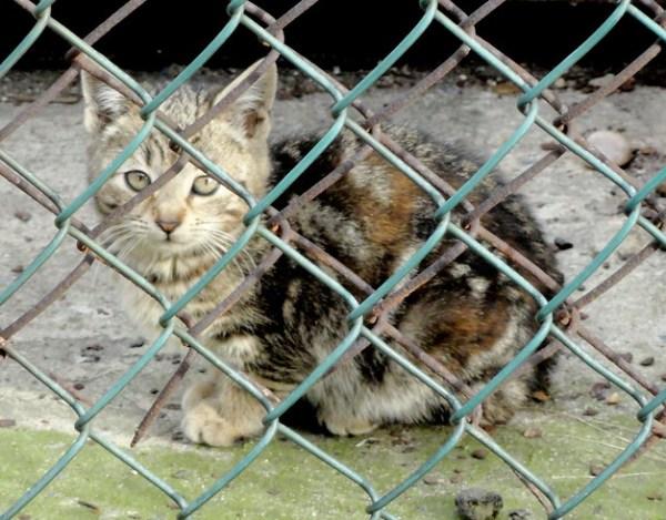 Mama Cat & kittens