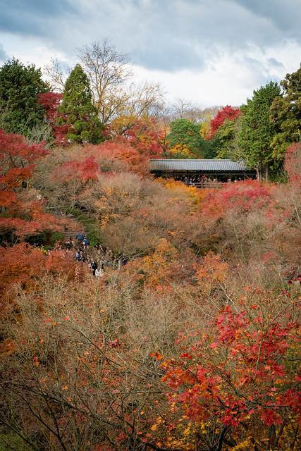 Kyoto Tofukuji Koyo Autumn colors