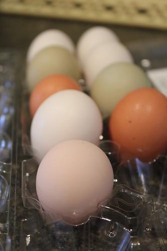 20121221. Beaker's little pink egg.