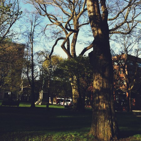 King Square Trees - iPhone Photography Project #iPP