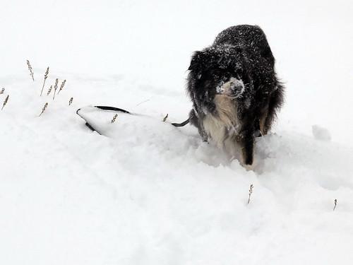 Odin i snøen