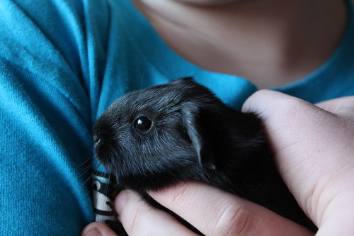 Day 2 of the baby guinea pigs!