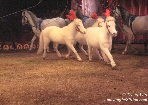 Jenny Vidbel's Ponies