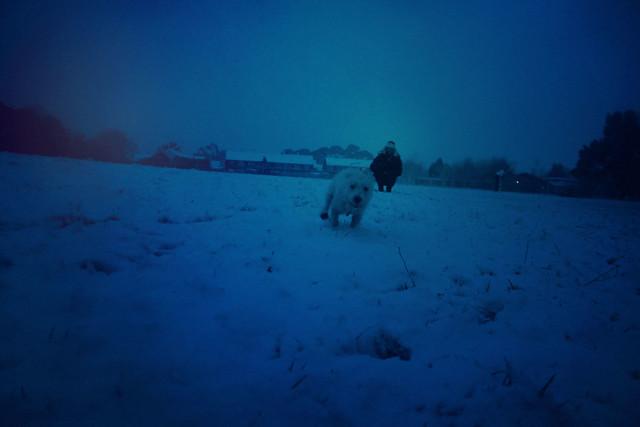 Bodhi running in snow
