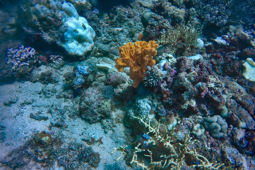 Just a few of the colors we saw on our dive.