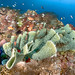 sponge reef